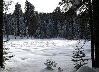 """Тропа """"Big trees trail"""" вокург """"круглого луга""""."""