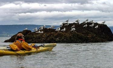 Рон и чайки, выстроившиеся по ветру.