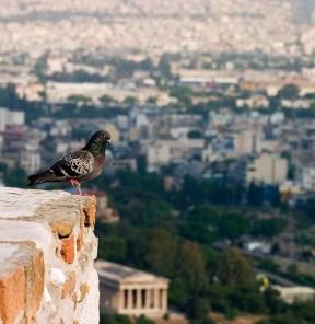 Голубь медитирует над Афинами.