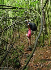 Вверх по тропе Na'ili'ili-haele через заросли бамбука.
