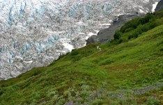 Лето и зима в одном кадре. Ледник Exit Glacier.