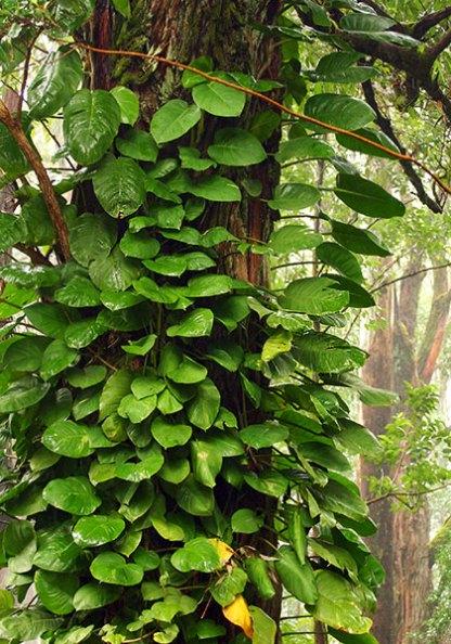 Тропический лес под дождем.