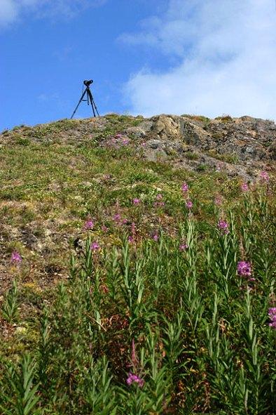 Штатив на горе Dumpling Mountain, в окружении иван-чая.