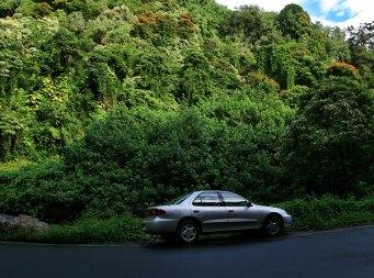 Шевроле в тропическом лесу.