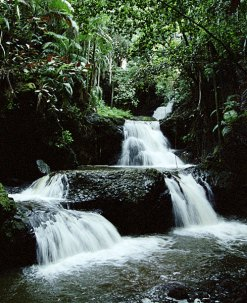 Многоуровневый водопад Onomea Falls. Гавайский ботанический сад.