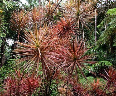 Гавайский ботанический сад.