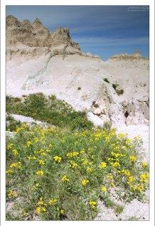 Заросли Термопсиса, или Prerie Goldenpea на тропе Notch Trail.