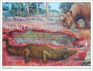 Аллигаторы жили на территории Бэдлендс 37 миллионов лет назад.