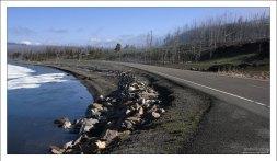 Дорога по северному краю озера Йеллоустоун.