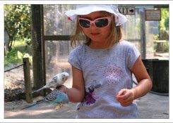 Саша с волнистыми попугайчиками на выставке Budgie Adventure в зоопарке Gulf Breeze Zoo.