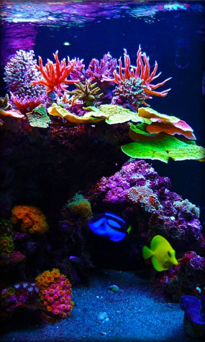 Aquarium Live Wallpaper Android App APK by Milan