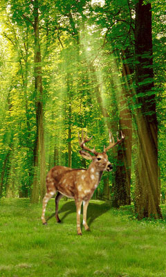 3d Effect Live Wallpaper Android Apk Forest In Deer Livewallpaper Android App Free Apk By Fun