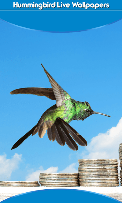Free Hummingbird Live Wallpapers Android App APK by Latest Application And Games