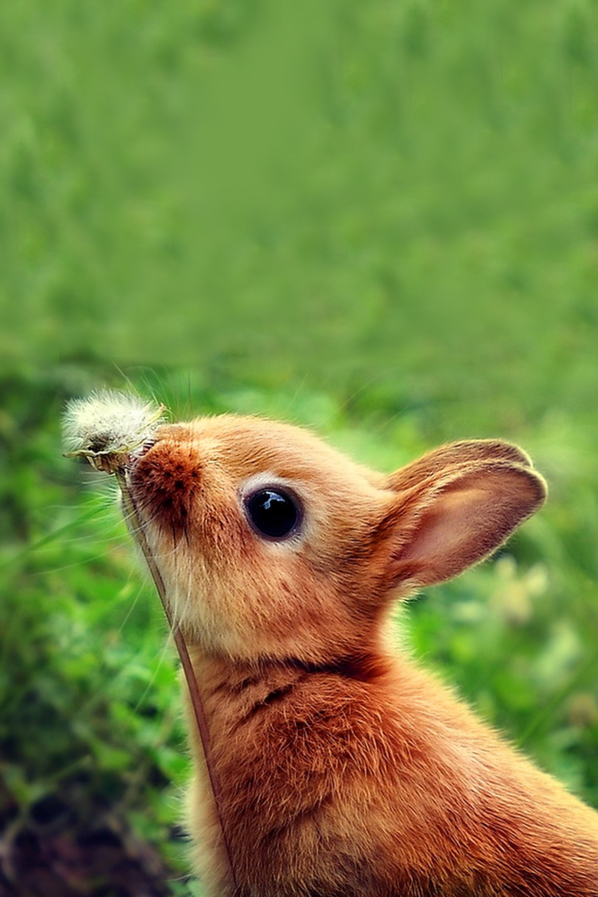 Easter Wallpaper Hd Cute Bunny Smelling Flower Android Wallpaper