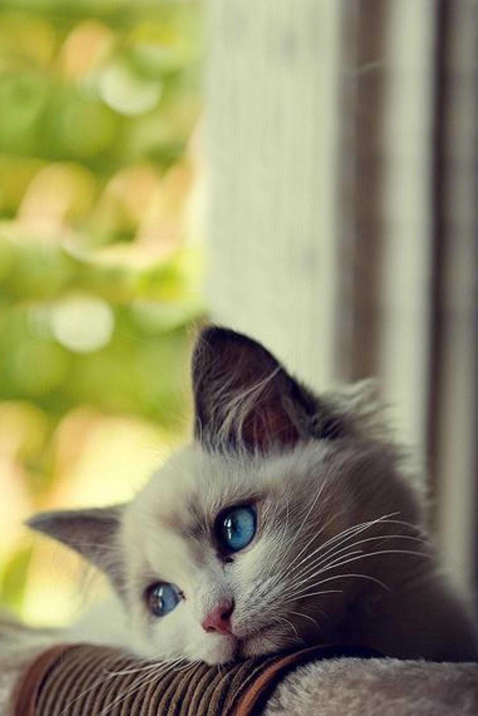 Cute Cat Wallpapers Kitten Cute Kitten Bored Android Wallpaper
