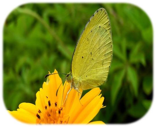 butterfly-176708_640