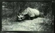 El safari de Roosevelt