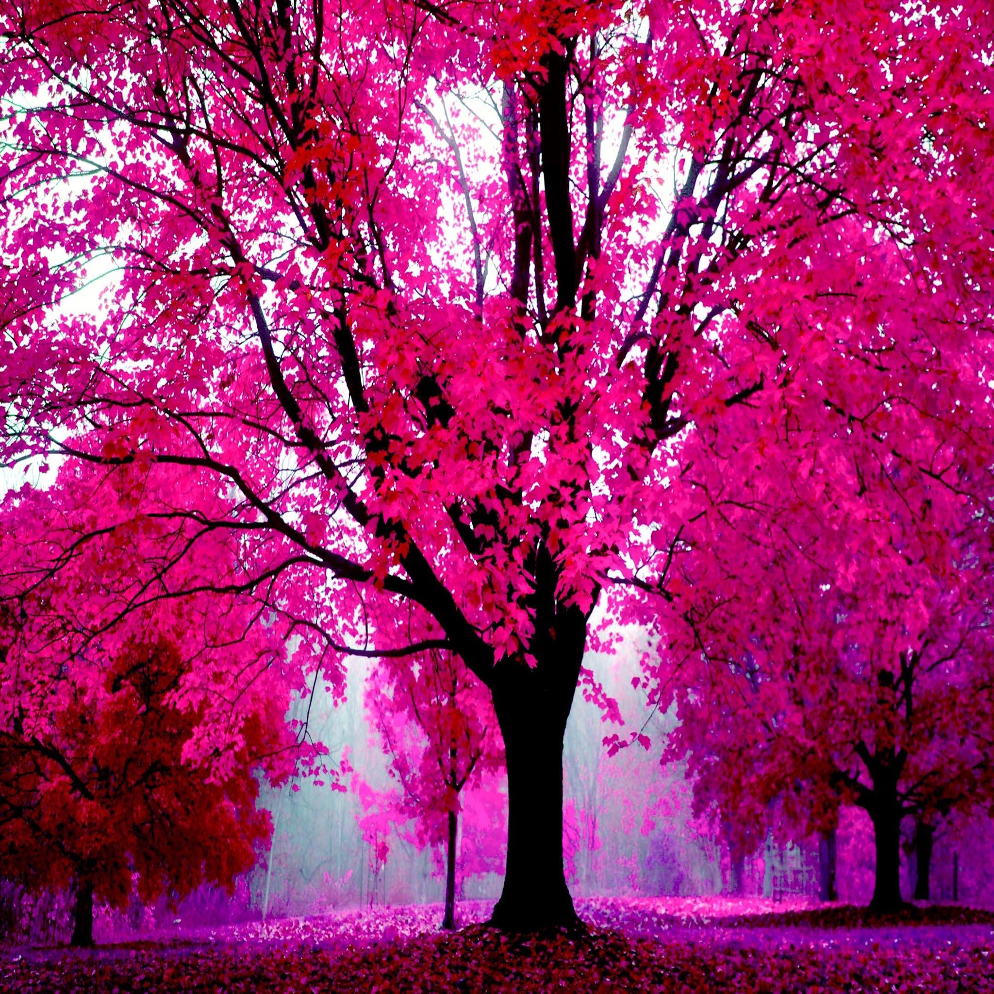 Iphone Pretty Wallpaper Fond D 233 Cran Ipad Automne Rose 2048x2048 Gratuit