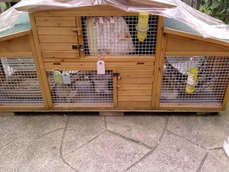 Housing Your Ferret - Frisky Business Ferretry