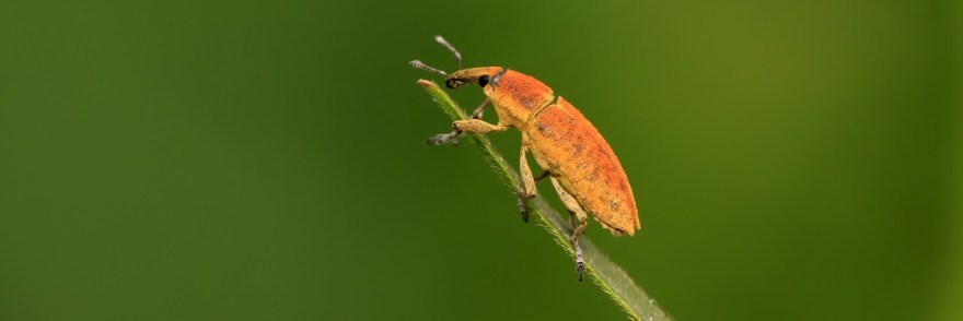Close up of insect perched on tip of thin grass-like plant