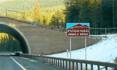 animal bridge