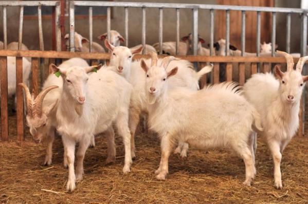 Dossier de la revue Ethica sur l'étique animale