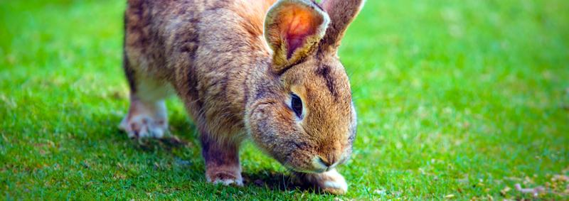 Small rabbit on green grass