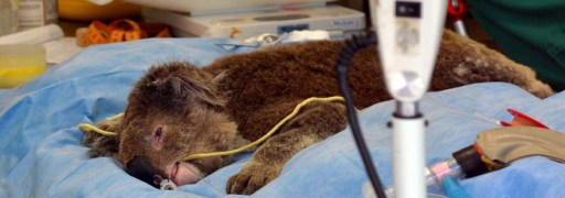 medical-treatment-wild-animals