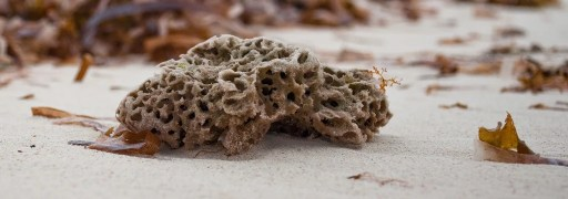 sea-sponge-what beings-are-not conscious