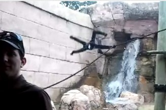 激高してものすごい勢いで飛んで来る猿