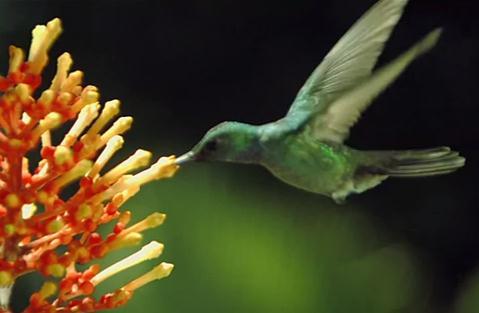植物の受粉を手伝う虫や鳥・コウモリの高画質映像