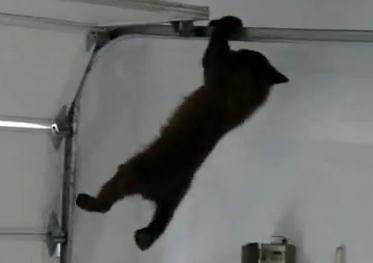 ガレージ迷い込む子熊、助けに来た母熊