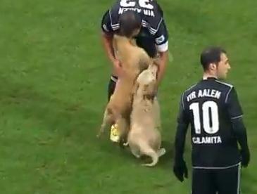 サッカーの試合中、2匹のワンコが乱入