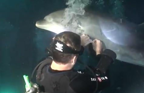 釣り糸が巻き付いてしまったイルカを救助するダイバー