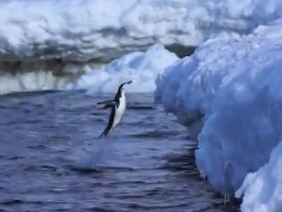 海中からジャンプ!ペンギンのジャンプ力に注目