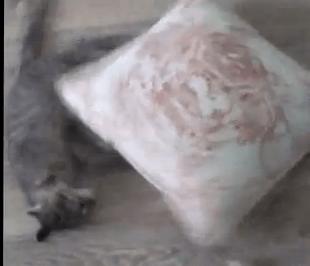 クッションで運動不足解消する猫