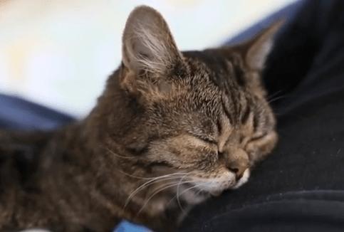 ネコのいびき