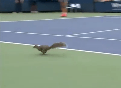 リスの乱入でテニスの試合中断