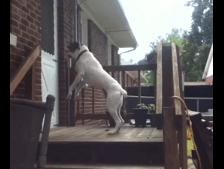 やたらジャンプ力のあるワンコ
