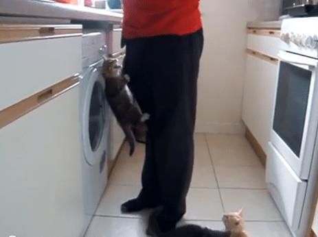 子猫が騒ぎすぎて餌の準備が捗らないよー