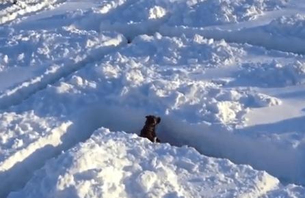 巨大迷路で遊ぶワンコ