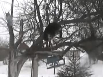 鳥の餌を盗む猫