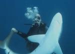 ダイバーと遊ぶ人懐っこいサメ