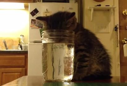 水を飲みながら眠りに落ちてしまった子猫