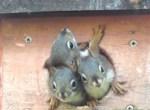 小屋から顔を出すリスの赤ちゃんたち