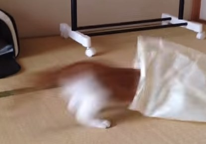 スーパーの袋に勢いよく飛び込むニャンコ