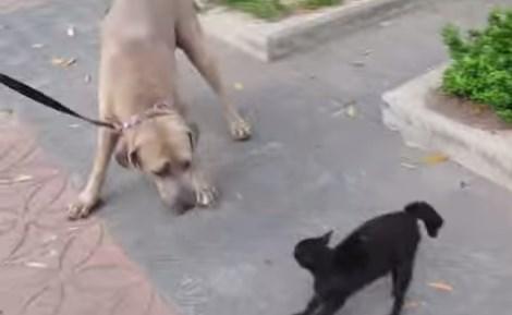 子猫に襲いかかった大型犬に母猫が猛アタック
