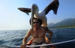 ペリカンと一緒にカヤックで釣りを楽しむ男性