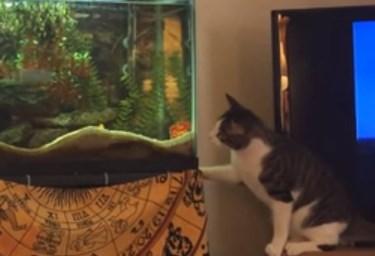 ニャンコが水槽の魚めがけてジャンプ