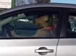 車にワンコを置いたまま買い物中の飼い主に警告!